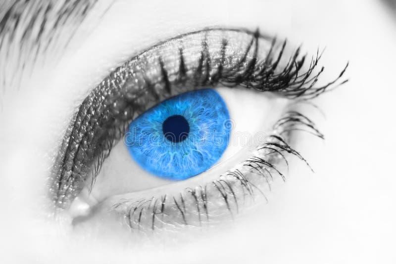 Verticale d'un beau œil bleu femelle photo stock