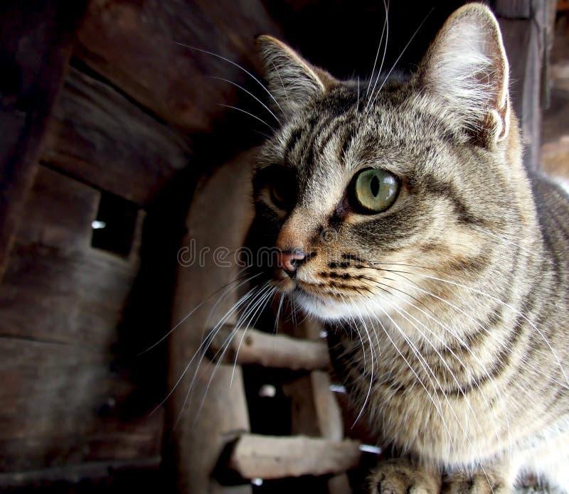 Verticale d'un chat images libres de droits