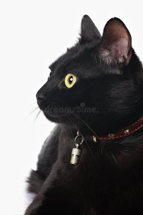 Verticale d'un chat noir images libres de droits