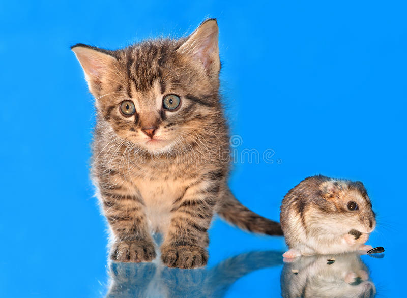 Verticale d'un chaton et d'un hamster images stock