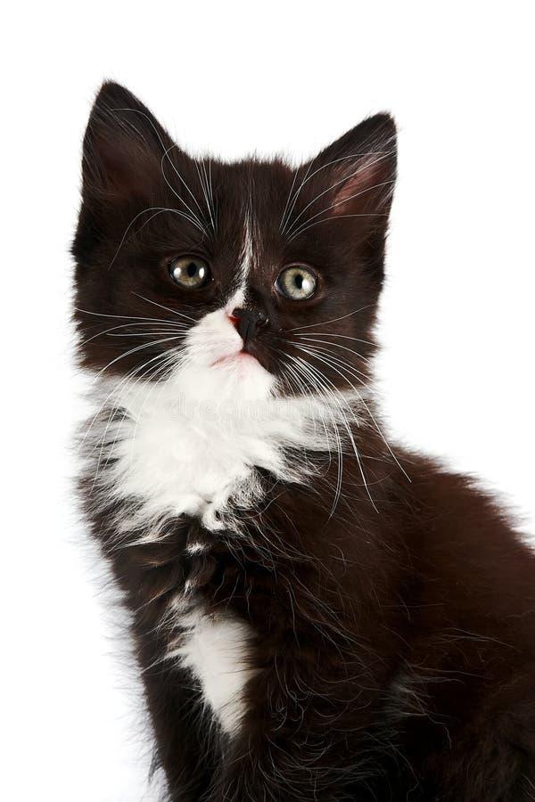 Verticale d'un chaton noir et blanc images libres de droits