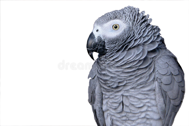 Verticale d'un perroquet photos stock