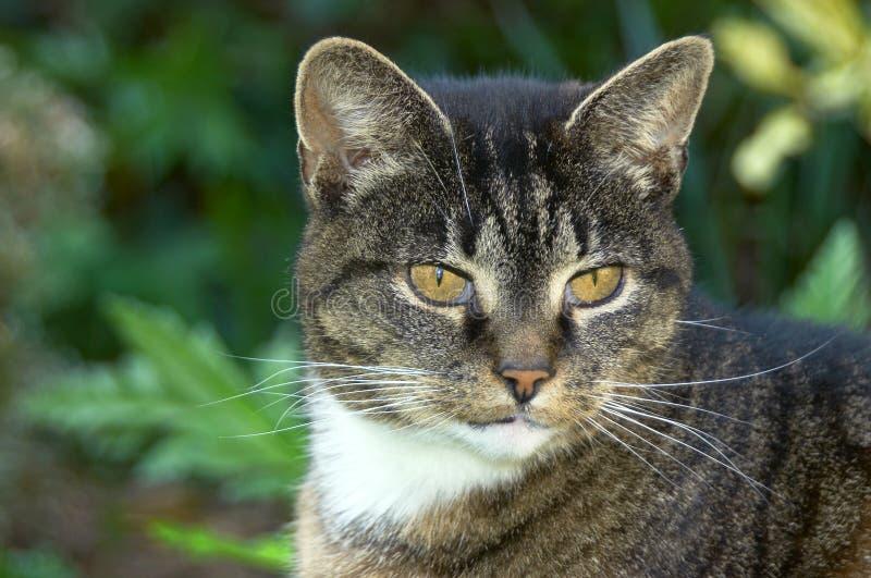 Verticale d'un vieux chat photos libres de droits