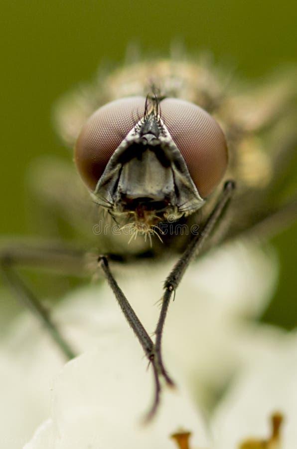Verticale d'une mouche photo stock