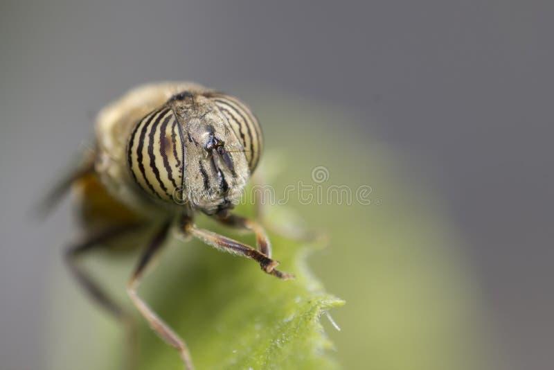 Verticale d'une petite mouche image stock