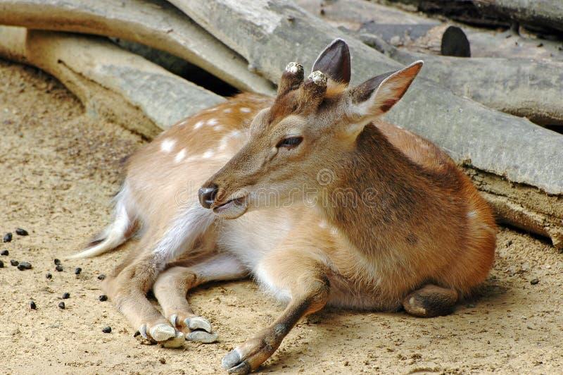 Verticale de Bambi image libre de droits