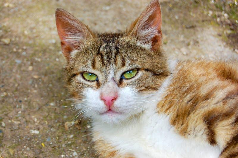 Verticale de chat image libre de droits