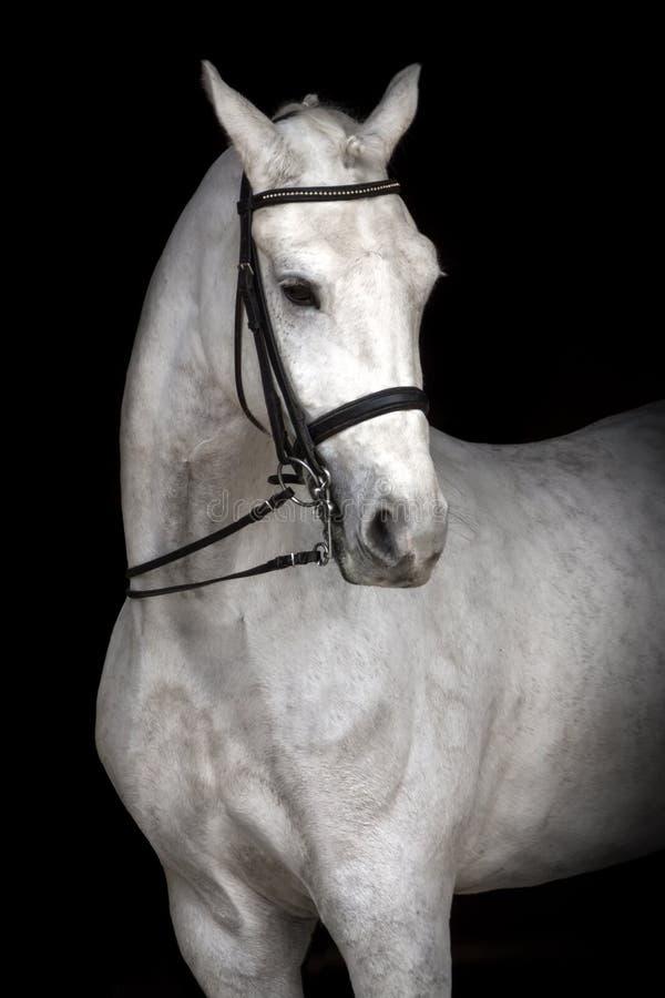 Verticale de cheval blanc images libres de droits