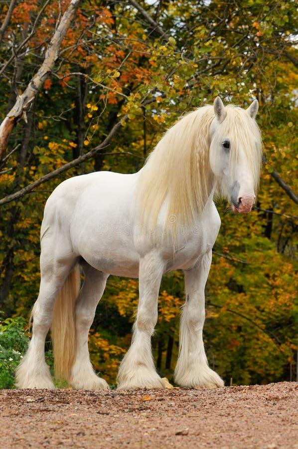Verticale de cheval blanc en automne photo libre de droits