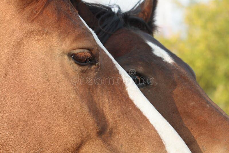 Verticale de chevaux images stock