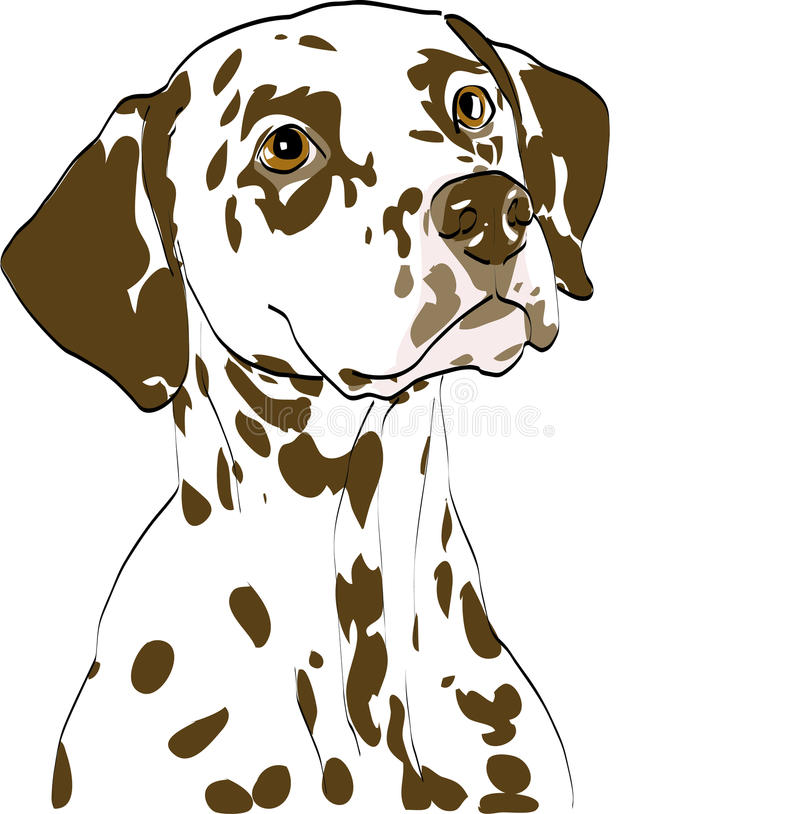 Verticale de chienne dalmatienne, foie repéré photos stock