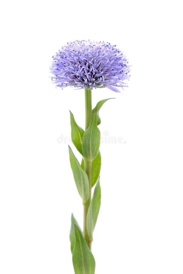 Verticale de fleur image libre de droits