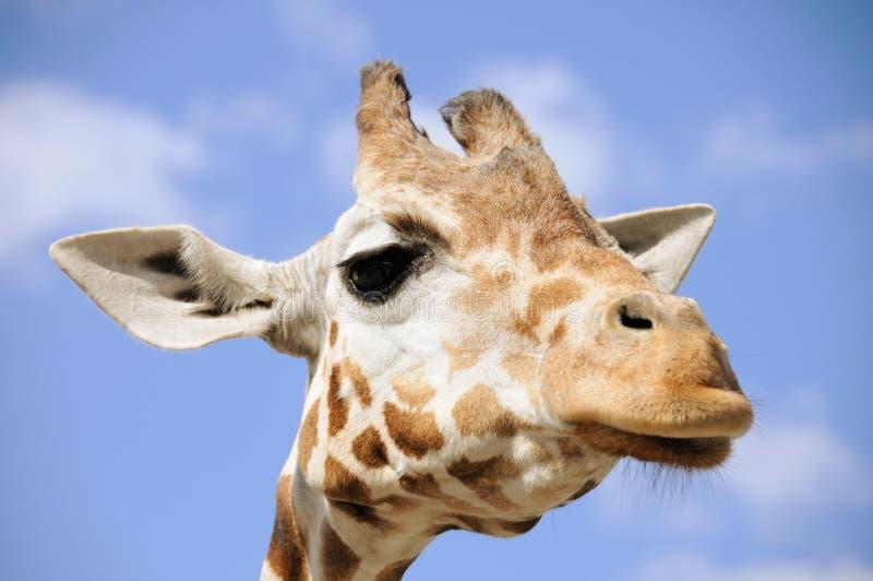 Verticale de giraffe image libre de droits