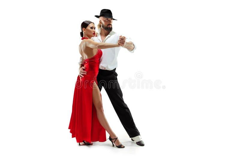 Verticale de jeunes danseurs de tango d'élégance Au-dessus du fond blanc photo libre de droits