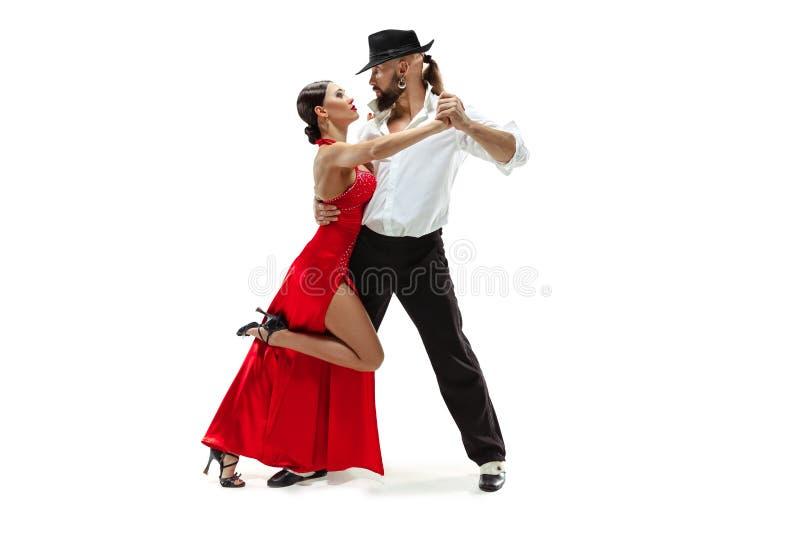 Verticale de jeunes danseurs de tango d'élégance Au-dessus du fond blanc photos libres de droits