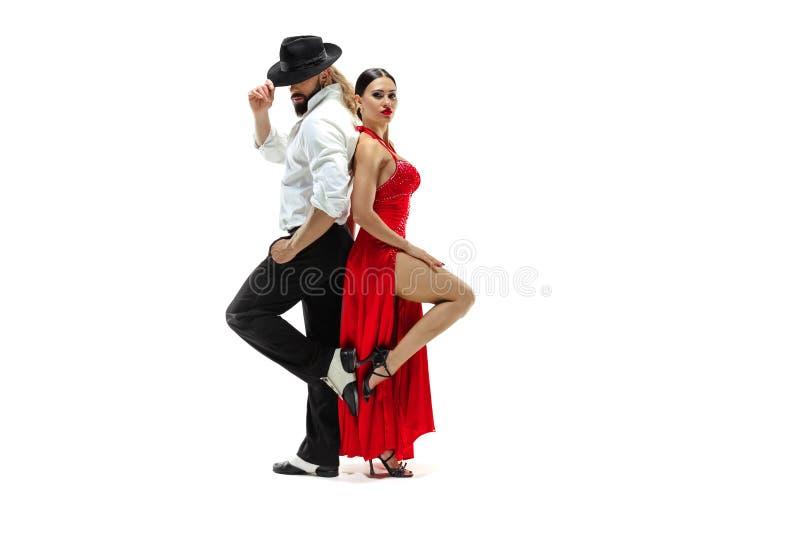 Verticale de jeunes danseurs de tango d'élégance D'isolement au-dessus du fond blanc photos libres de droits