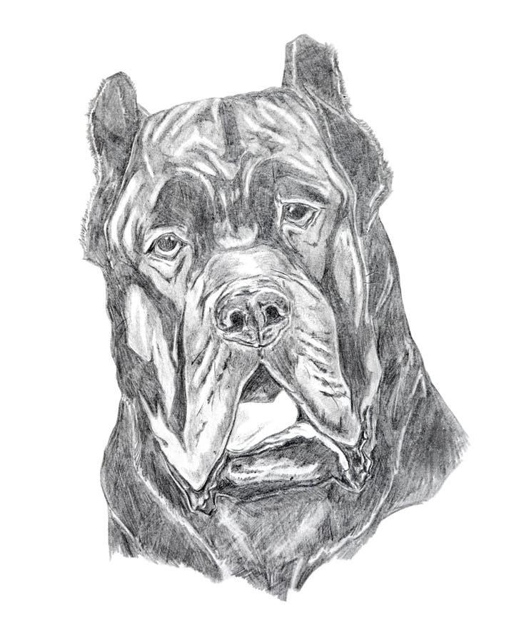 Verticale de Mastiff, dessin au crayon illustration de vecteur