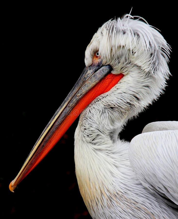 Verticale de Pelikan images libres de droits