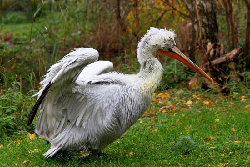 Verticale de Pelikan photo stock