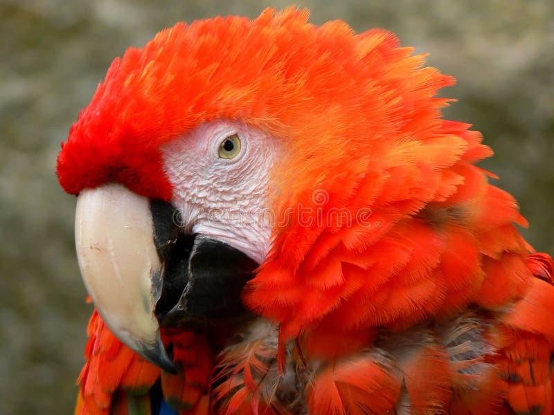 Verticale de perroquet images stock