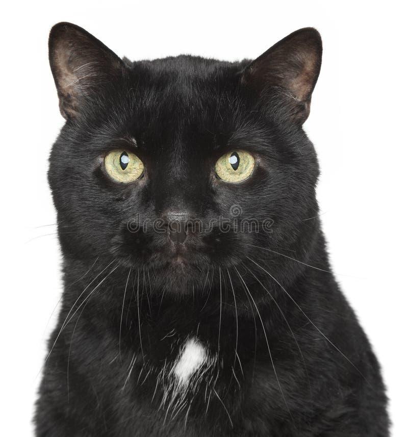 Verticale de plan rapproché de chat noir photographie stock libre de droits