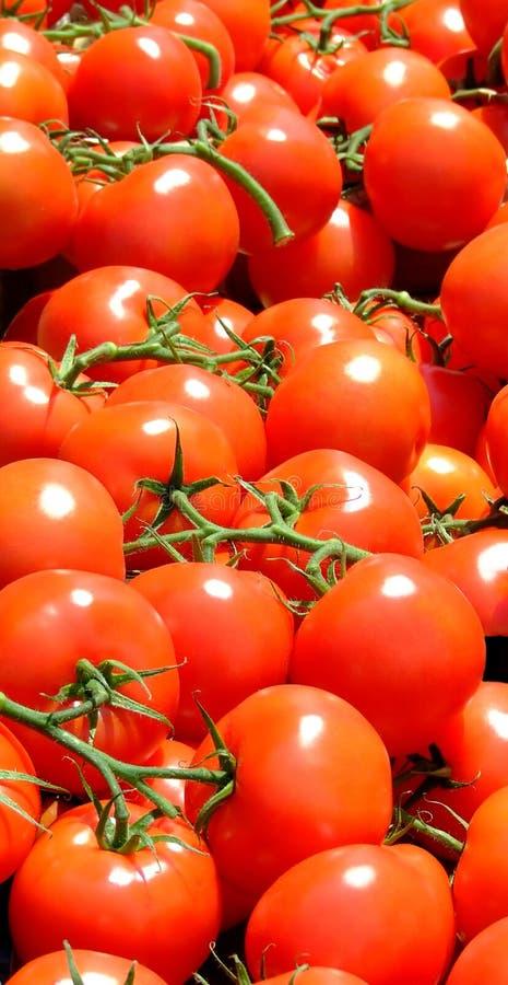Verticale de tomate image stock
