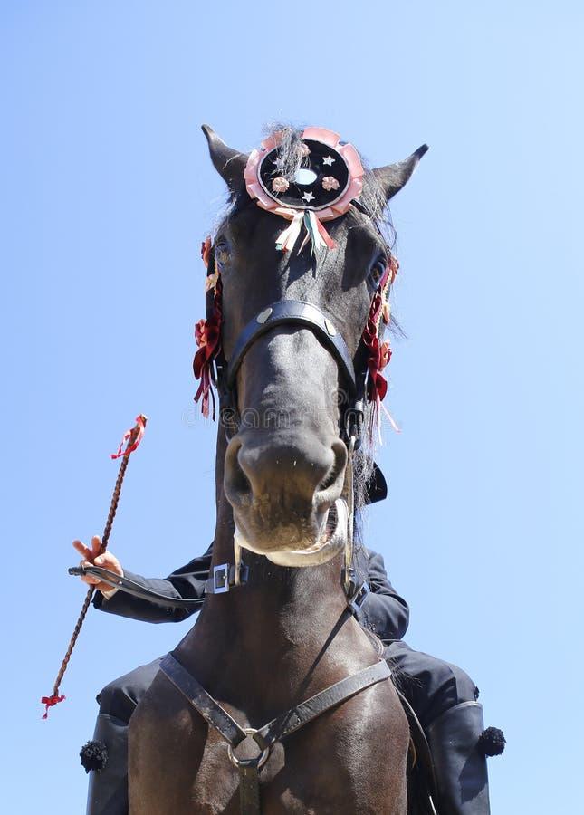 Verticale de vêtement de festivité de cheval de St John photographie stock libre de droits