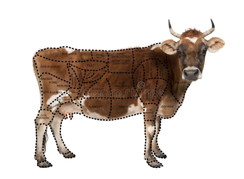 Verticale de vache brune du Jersey, 10 années photos stock