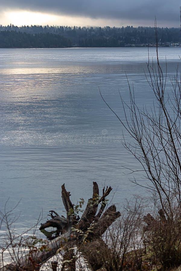 verticale di legname galleggiante sulla riva di Washington fotografie stock libere da diritti