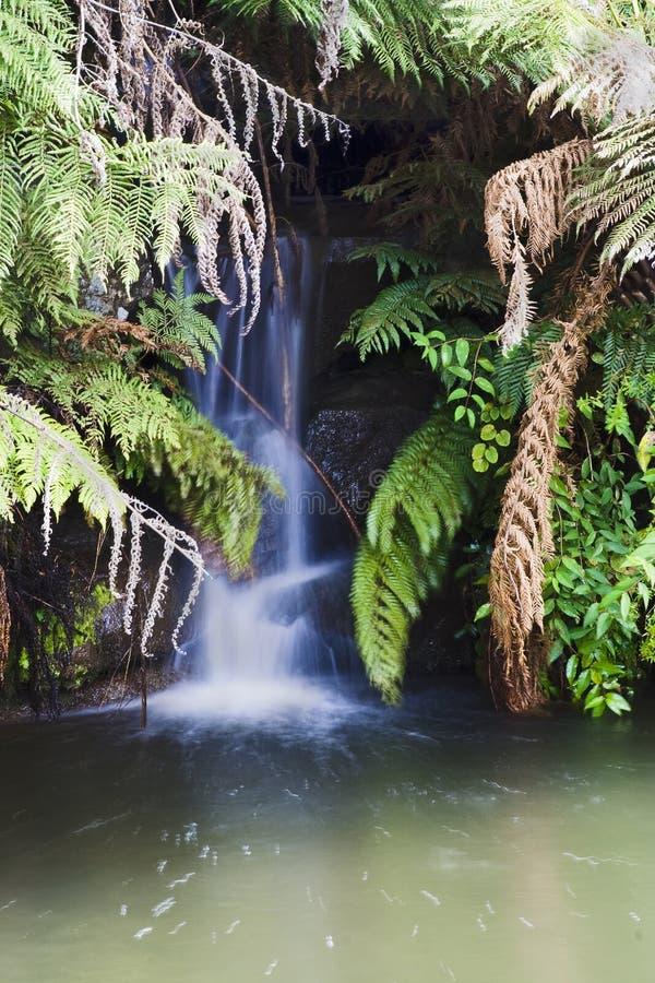 Verticale di Tomah della cascata immagine stock