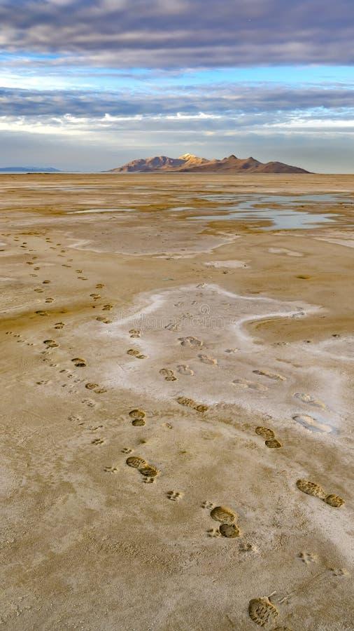 Verticale die kadervoetafdrukken van een mens en een hond op de bruine zandige kust van een meer wordt gestempeld stock foto's