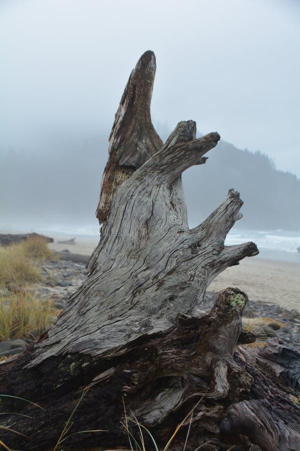 Verticale driftwood op Kaapmares aan de oregonkust stock afbeelding