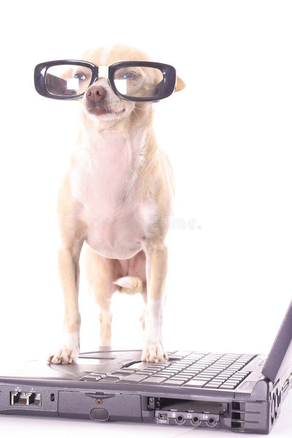 Verticale facile andato cane di affari fotografia stock libera da diritti