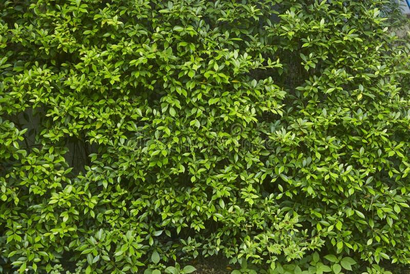 Verticale groene muurinstallatie stock afbeelding