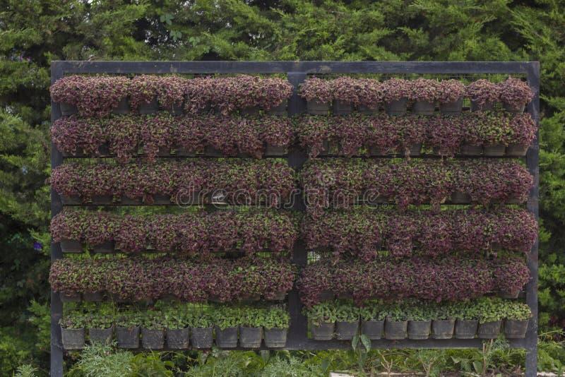 Verticale het tuinieren openluchtdieinstallaties keurig in de verticale installatiepot worden verfraaid royalty-vrije stock foto's