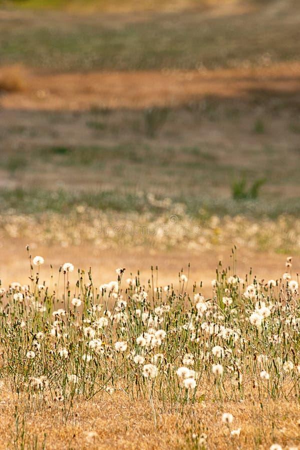 verticale lagen emmer gouden grassen en donkergroene paardebloemen stock afbeelding