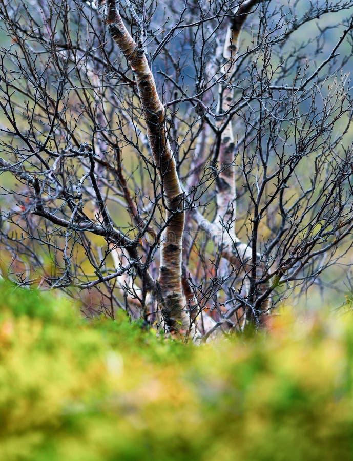 Verticale levendige van de de herfstboom van Noorwegen groene het gras bokeh aard backg royalty-vrije stock fotografie