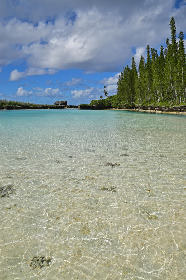 Verticale mening van Natuurlijke Pool in Ile des Pins met rij van lange pijnboombomen royalty-vrije stock afbeelding