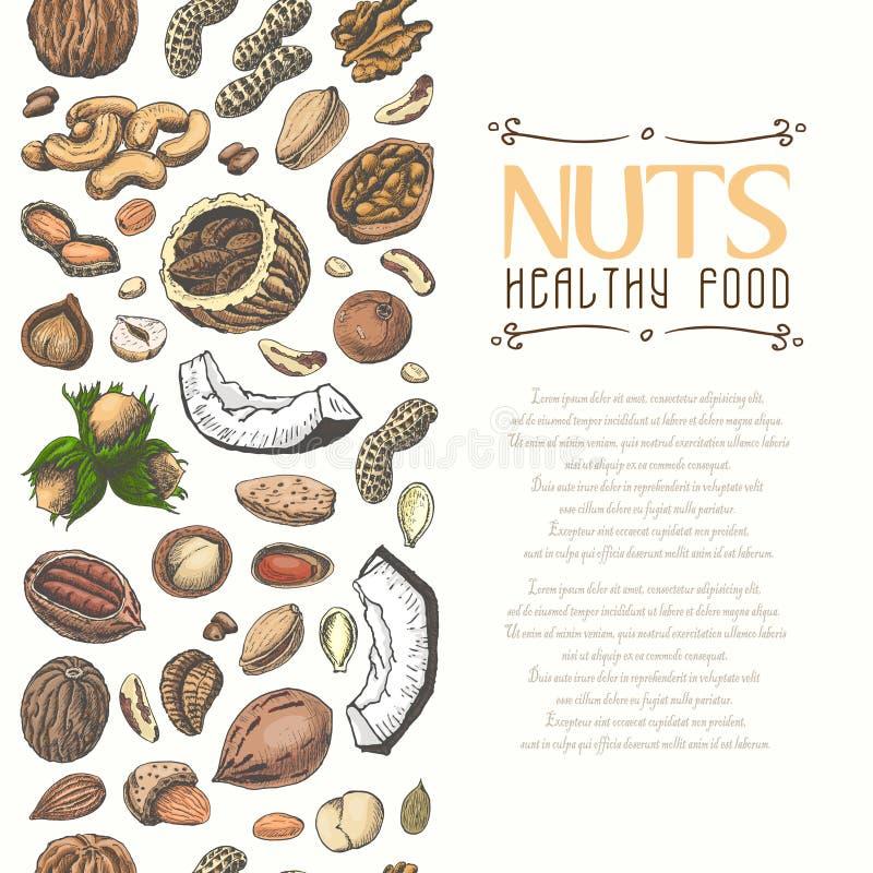 Verticale naadloze achtergrond met gekleurde noten en zaden royalty-vrije illustratie