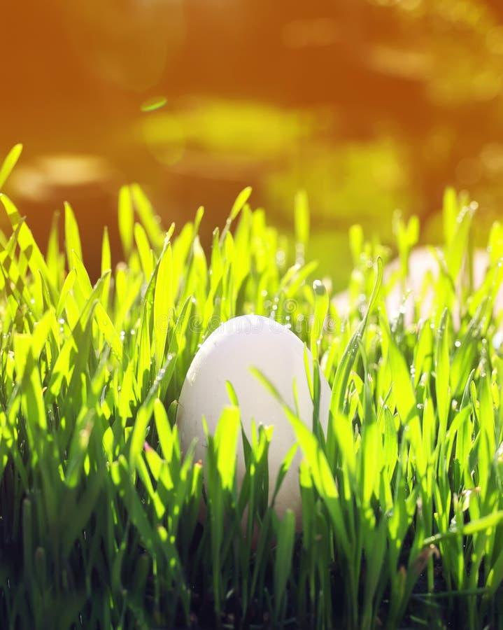 Verticale Pasen-achtergrond die met één wit kippenei in g liggen stock afbeeldingen