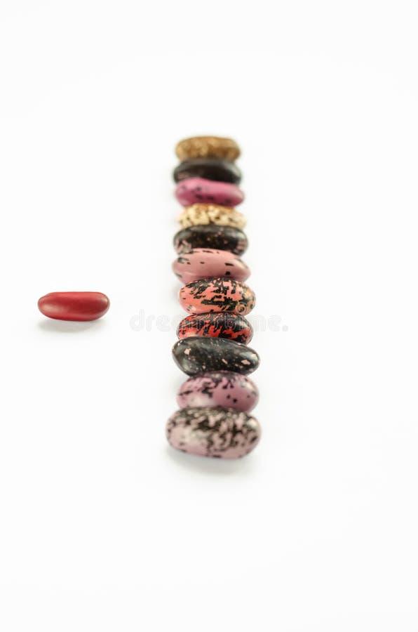 Verticale rij van multicolored bonen op witte achtergrond Twaalf ruwe nierbonen Close-up stock afbeelding