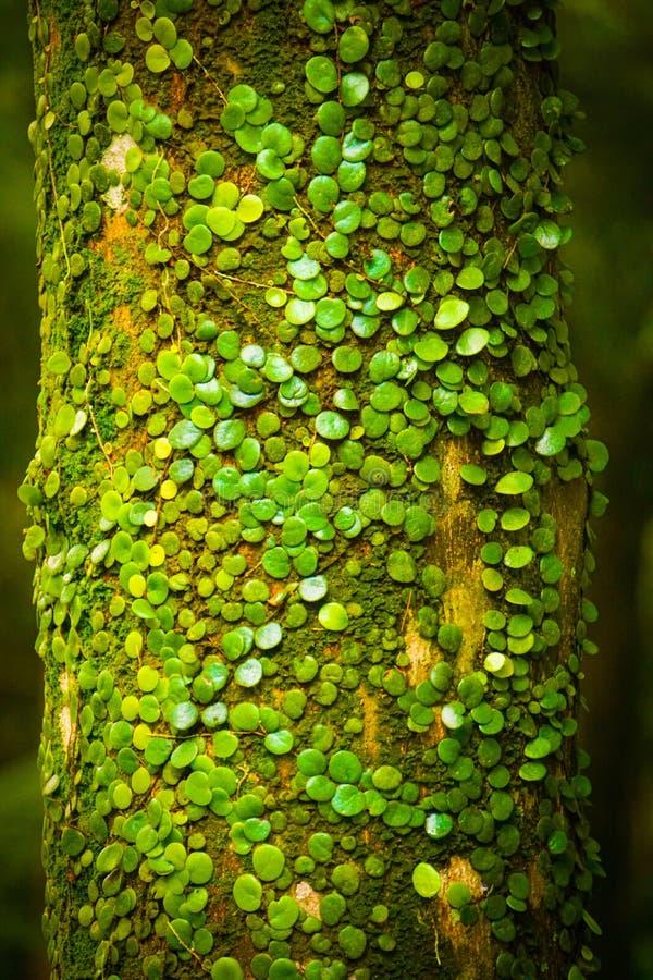 Verticale selectieve focus van een boomstam met kleine groene bladeren van mos erop stock afbeelding