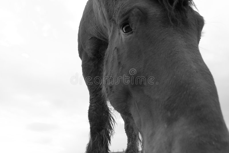 Verticale triste de cheval photographie stock