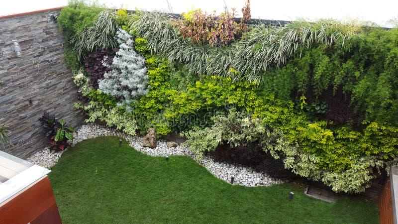 Verticale tuin stock afbeeldingen