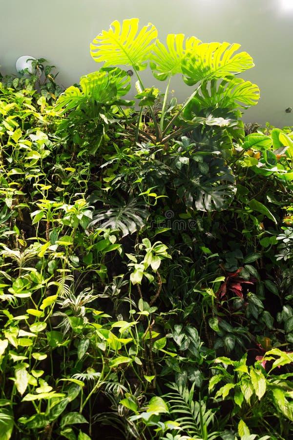 Verticale tuin, groene het leven muur met bloemen en installaties, binnen stock foto's