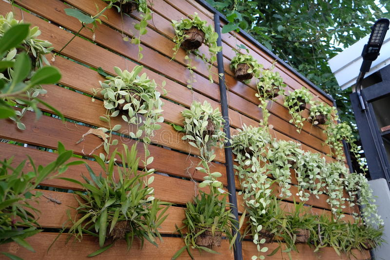 Verticale tuin op houten muur stock afbeelding afbeelding bestaande uit muur hout 74119651 - Plantas para vallas ...