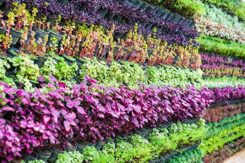 Verticale tuinmuren royalty-vrije stock foto's
