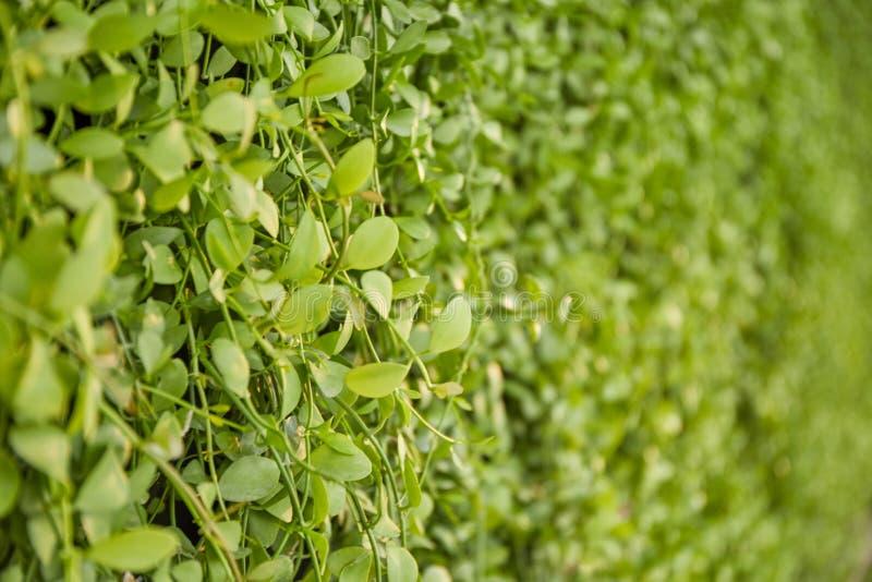 Verticale tuinmuur stock fotografie