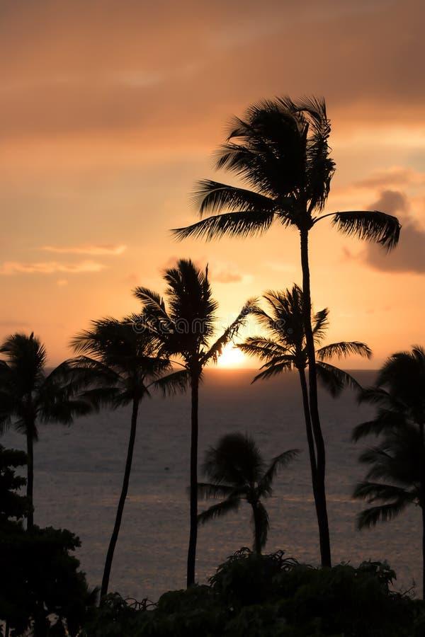 Verticale Zonsondergang met Zon op Oceaanhorizon en Palmen Silhoue stock afbeeldingen