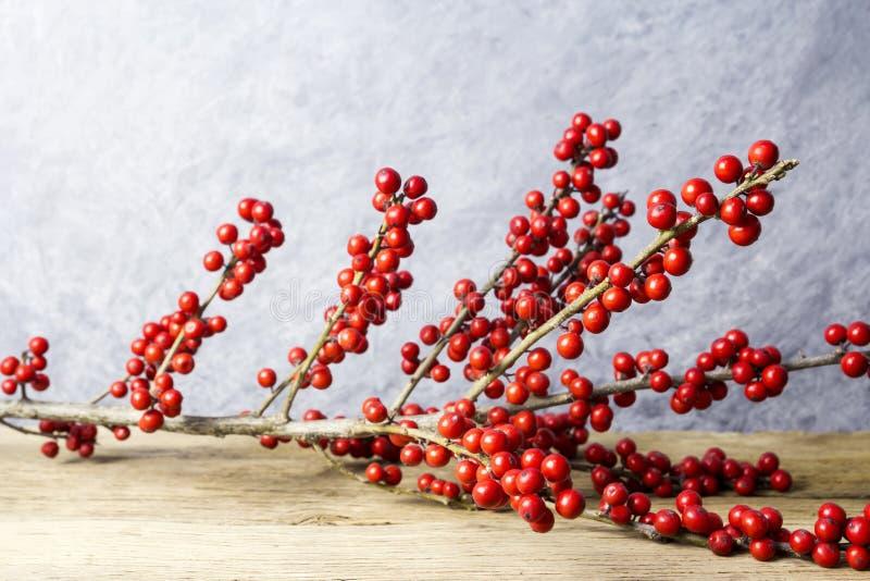 Verticillata διακοσμήσεων Χριστουγέννων ilex ή winterberry ελαιόπρινος στοκ φωτογραφίες